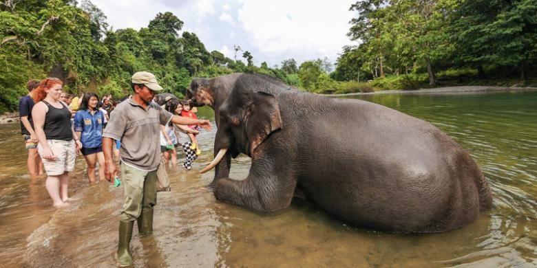 Tangkahan di Kabupaten Langkat, Sumatera Utara dikenal sebagai tempatnya gajah-gajah liar dan sungai yang masih terjaga kebersihannya.