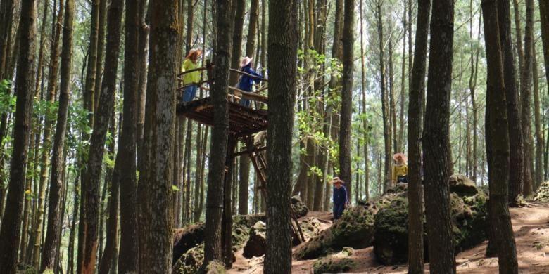 Hutan Pinus Mangunan masuk dalam kawasan Resort Pengelolaan Hutan (RPH) Mangunan. Lokasinya yang searah dengan Makam Raja-raja Imogiri seringkali membuat wisatawan terkecoh dengan menyebutnya Hutan Pinus Imogiri.