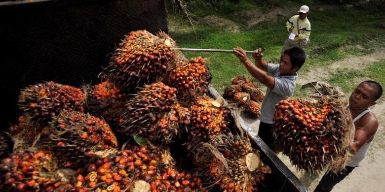 Sawit merupakan salah satu sektor pertanian menjanjian untuk rakyat Indonesia