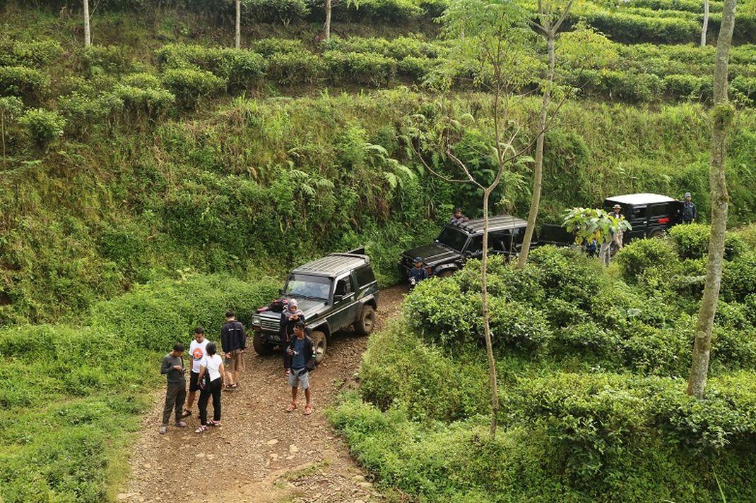 Travel - Mobil Jeep Perkebunan Teh Kertowono, Guci Alit, Lumajang