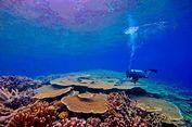 Rayakan Sumpah Pemuda, 8 Penyelam Mapala UI Jelajahi Teluk Tomini