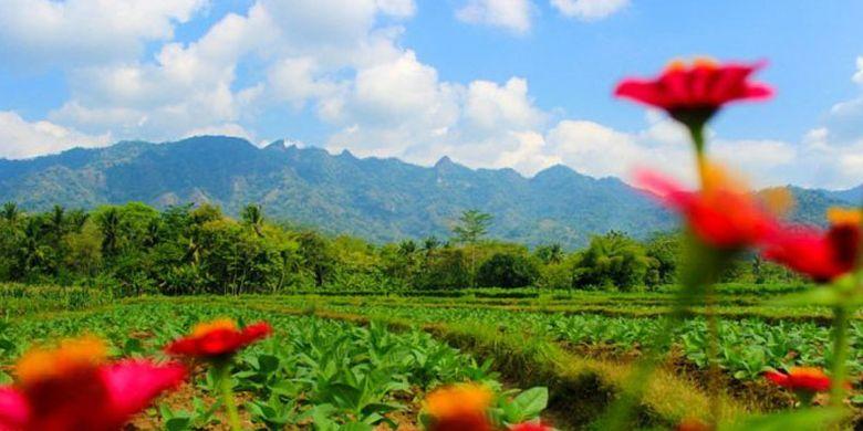 Wisata Kampoeng Organik di Dusun Bumen Desa Karangrejo, Borobudur, Jawa Tengah.