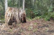 Misteri Jimmy Possum, Si Manusia Pohon dan Pembuat Kursi Tasmania