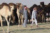 Semua Unta dan Domba Qatar Diusir dari Padang Arab Saudi