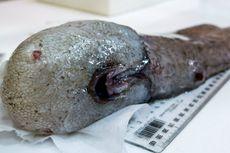 Hilang Selama 150 Tahun, Ikan Tanpa Wajah Ditemukan Kembali