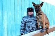 Rusia dan Korea Selatan Kembangkan Anjing Tentara untuk Perang?