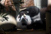 Xiang Xiang, Bayi Panda yang Jadi Idola di Jepang