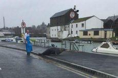 Pria di Irlandia Kejar Anjing Laut yang Datang ke Tokonya