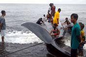 Seekor Paus Terdampar di Pantai Ternate