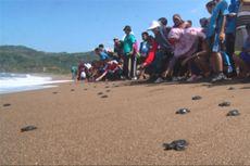 Yuk Ikut Melepas Tukik Di Pantai Kili-kili Trenggalek