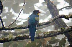 Burung Langka Luntur Gunung Ditemukan di Lereng Gunung Slamet