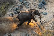 Apa yang Harus Anda Lakukan untuk Memindahkan 500 Gajah?
