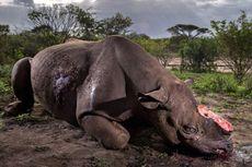 Foto Pembantaian Badak Menangi Penghargaan Dunia WPY