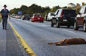 Bolehkah Hewan yang Mati Tertabrak di Jalan Dijadikan Santapan?