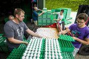 Skandal Insektisida di Belanda, Jutaan Telur di Eropa Terkontaminasi