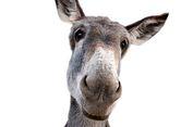 Bersetubuh dengan Keledai, Pemuda 23 Tahun Divonis Penjara 12 Bulan