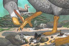 Lama Jadi Teka-teki, Kehidupan Burung Dodo Mulai Terkuak