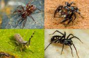 Kompetisi Penamaan Laba-laba Baru Dibuka, Tertarik Berpartisipasi?