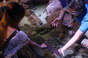 Lima Aktivitas Seru di Jakarta Aquarium!