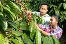 Libur Lebaran, Saatnya Wisata Petik Kopi di Kampoeng Kopi Banaran