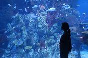 Menjelajah Laut Indonesia dengan Beragam Satwa Langka...