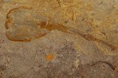 Lama Dicari, Makhluk Langka Zaman Purba Ditemukan Mati Sendiri