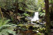 Menikmati Suara Kesunyian di  'Jurassic Park' Tasmania