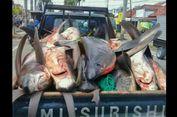 Viral, Foto Belasan Ikan Hiu Mati Diangkut Mobil Pikap di Cilacap