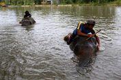 Diserang Gajah Saat Memberi Makan, Pemilik Levi Rafting Bali Tewas