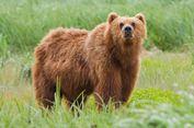Remaja Tewas Diterkam Beruang Saat Ikut Lomba Lintas Alam