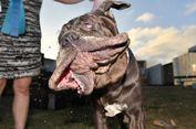 Berita Terpopuler: Bayi Bertangan Empat hingga Anjing Berwajah Jelek