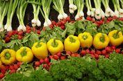 Usaha Membangun Pelopor Pertanian Organik