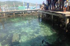 Berani Foto dengan Ikan Hiu di Karimunjawa?