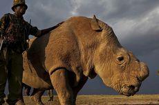 Badak Jantan Putih Kenya Masuk Aplikasi Kencan Tinder