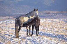 Sehatkah Susu Kuda Liar?