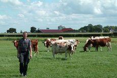 Peternakan Inovatif Berbasis Lingkungan dan Kesejahteraan Hewan di Belanda