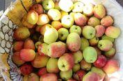 Cegah Penuaan Dini dengan Rutin Makan Apel