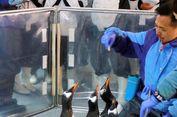 Bermain ke 'Kutub Selatan' dan Bertemu Penguin
