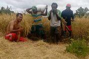Menggerakkan Pertanian di Kampung Pedalaman Papua