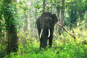 Beri Salam ke Gajah, Pria di India Justru Tewas Diinjak-injak