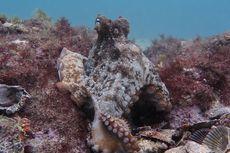 Ditemukan, Kota Gurita Baru di Dasar Laut Bernama Octlantis