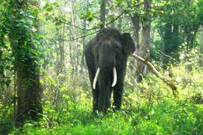Dilempar Seekor Gajah, Remaja Ini Tak Sadarkan Diri
