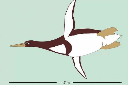 Setinggi Kulkas, Inilah Wujud Penguin Terbesar Kedua dalam Sejarah
