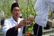 'Matur Nuwun Pak Jokowi, Santri Al Mina Akan Kirim Tomat ke Istana'