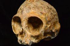 Fosil Baru Mengungkap Wajah Nenek Moyang Manusia dan Kera