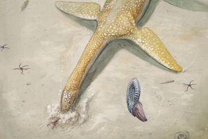Puluhan Tahun Menunggu, Identitas Monster Laut Ini Akhirnya Terungkap