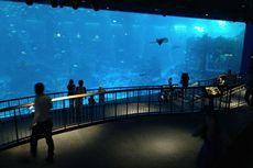 Anda Bisa Menginap hingga Menikah di S.E.A. Aquarium