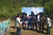 Elang Jawa Jantan Dilepasliarkan di Hutan Kamojang