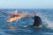 Terekam Kamera, Anjing Laut Bertarung Melawan Gurita