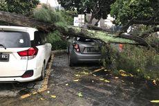 Apakah Mobil Ketiban Pohon Tumbang Ditanggung Asuransi?